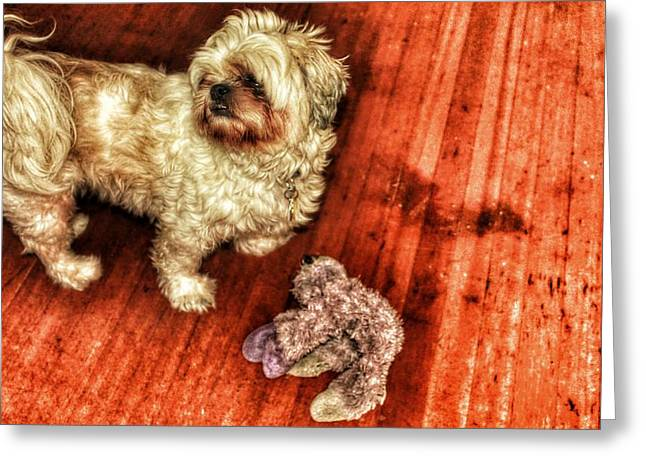 Toy Dog Greeting Cards - Aunties Joy Greeting Card by Philip Hennen
