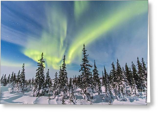 Nature Study Greeting Cards - Aurora Borealis Over The Trees Greeting Card by Alan Dyer
