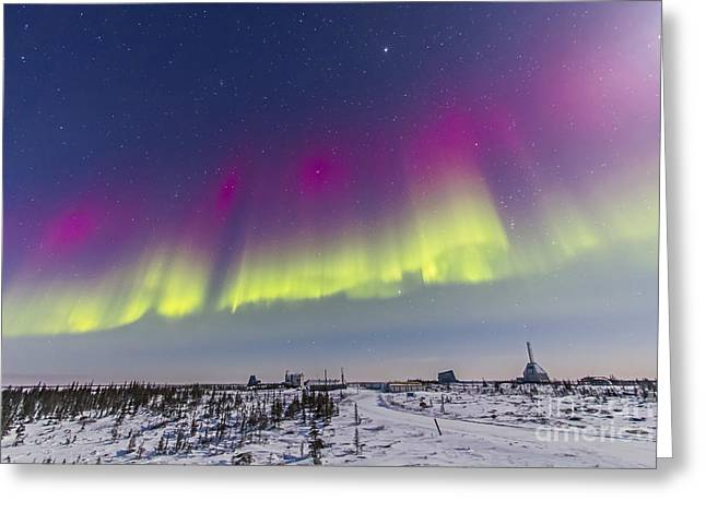 Nature Study Greeting Cards - Aurora Borealis Seen From Churchill Greeting Card by Alan Dyer