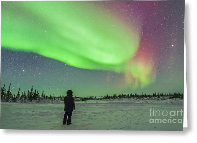 Arcturus Greeting Cards - Aurora Borealis With Vega And Arcturus Greeting Card by Alan Dyer