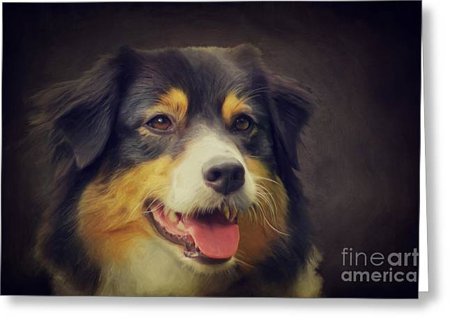 Best Friend Greeting Cards - Australia Shepard Portrait Greeting Card by Angela Doelling AD DESIGN Photo and PhotoArt