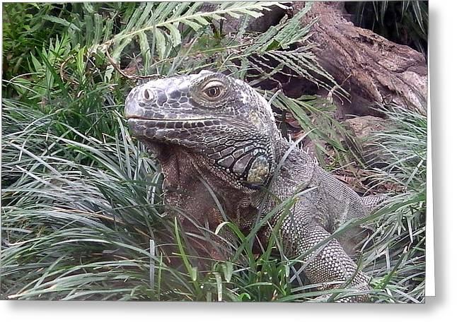 Sit-ins Greeting Cards - Australia Taronga Zoo - The Dragon Greeting Card by Jeffrey Shaw
