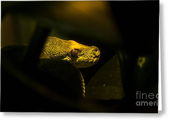 Preditor Greeting Cards - Australian Green Tree Python Greeting Card by Alicia Collins