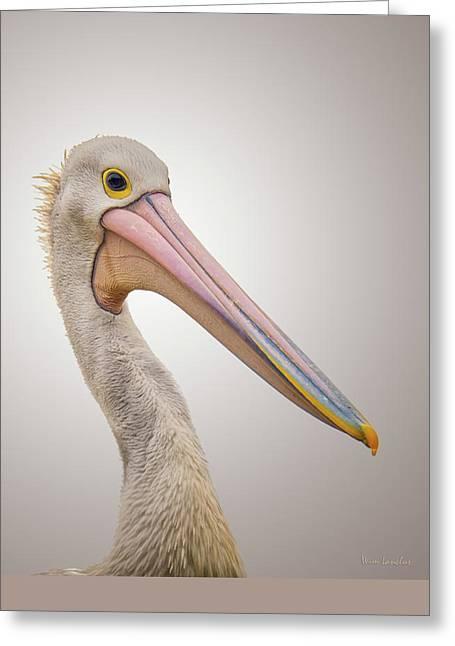 Australian Pelican Greeting Card by Wim Lanclus