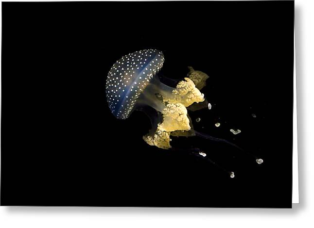 Australian Spotted Jellyfish Greeting Card by Heather Applegate