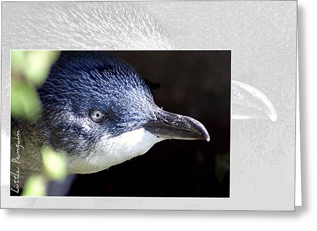 Australia Wildlife Greeting Cards - Australian Wildlife - Little Penguin Greeting Card by Holly Kempe