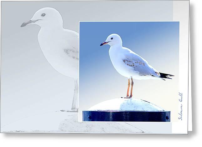 Seagulls Digital Greeting Cards - Australian Wildlife - Silver Gull Greeting Card by Holly Kempe