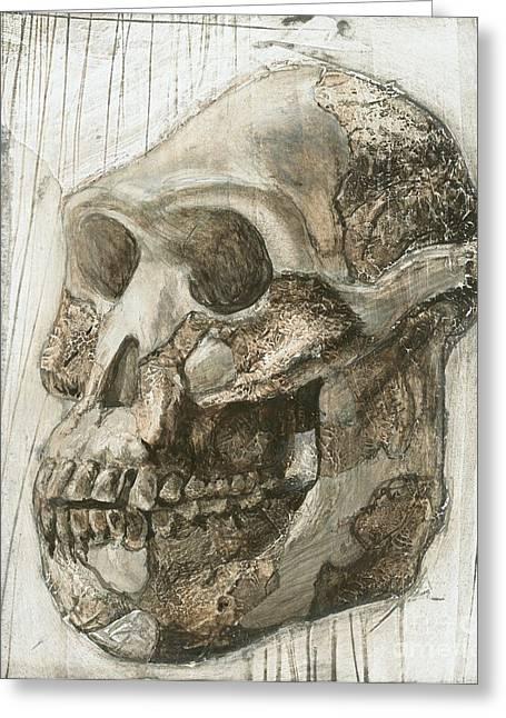 Localities Greeting Cards - Australopithecus Afarensis Skull Greeting Card by Kennis & Kennis/MSF
