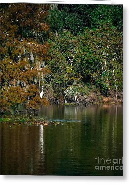 Autumn Bayou Greeting Card by Jonathan Chadwick