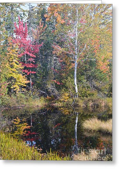 Reflecting Water Greeting Cards - Autmn Colors Reflected In A Pool Greeting Card by Mark Guilfoyle