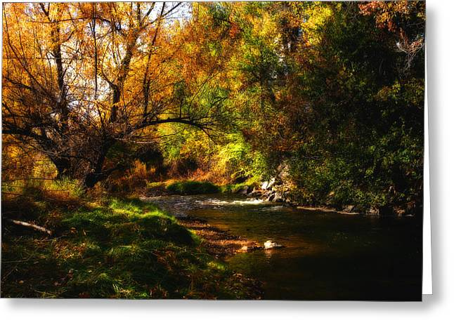 Autum Spring Greeting Card by Mark Courage