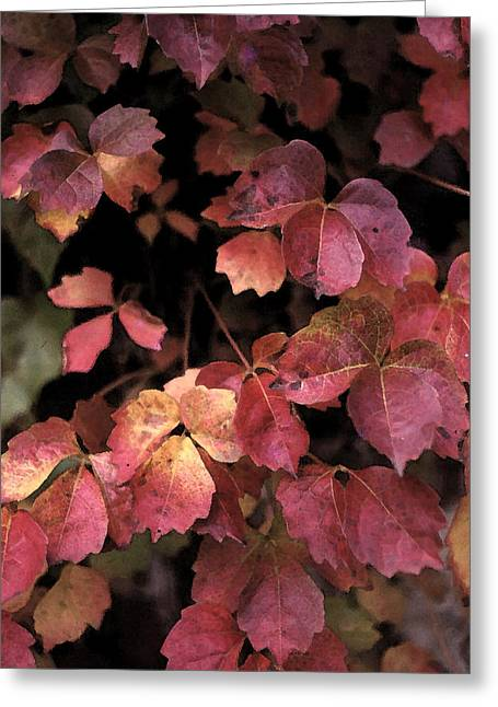 Shades Of Red Greeting Cards - Autummn Leaves  Greeting Card by Elizabetha Fox