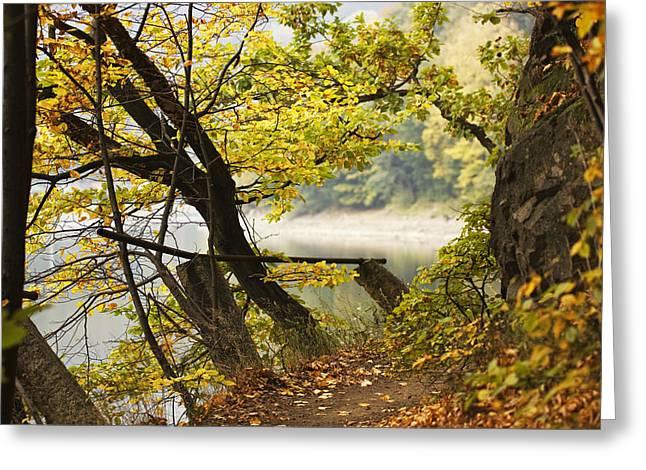Autumn 9 Greeting Card by Dominika Aniola