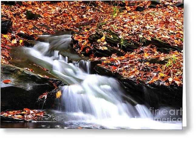 Allegheny Greeting Cards - Autumn along Birch River Greeting Card by Thomas R Fletcher