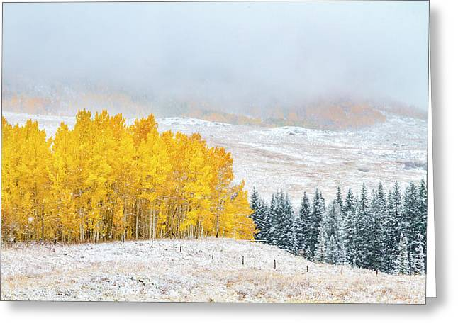 Autumn And Winter Collide Greeting Card by Teri Virbickis