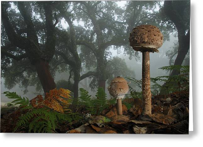 Mushrooms Greeting Cards - Autumn Greeting Card by Andres Miguel Dominguez