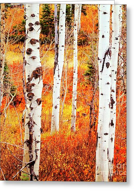 Top Seller Greeting Cards - Autumn Aspens Greeting Card by David Millenheft