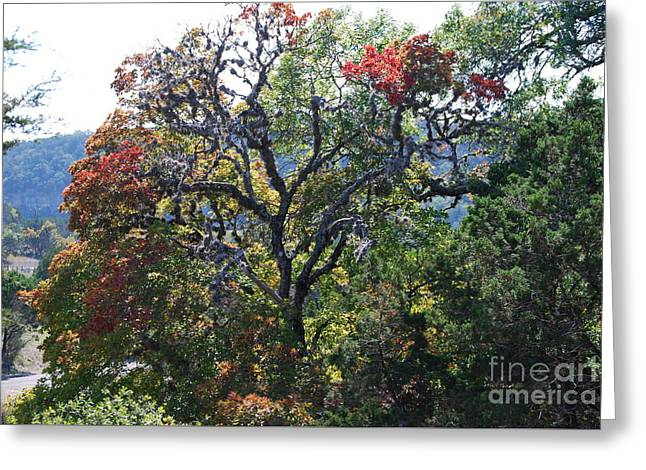 The Hills Greeting Cards - Autumn at Lost Maples State Park  Greeting Card by Ruth  Housley