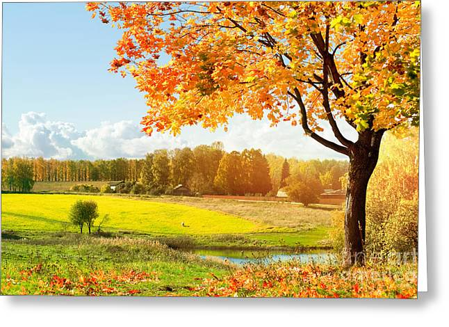 Autumn At The Morning Park Greeting Card by Unknow