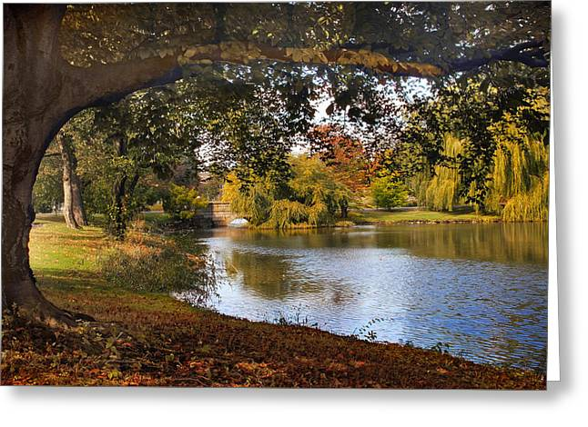 Framing Greeting Cards - Autumn at Woodlawn Greeting Card by Jessica Jenney