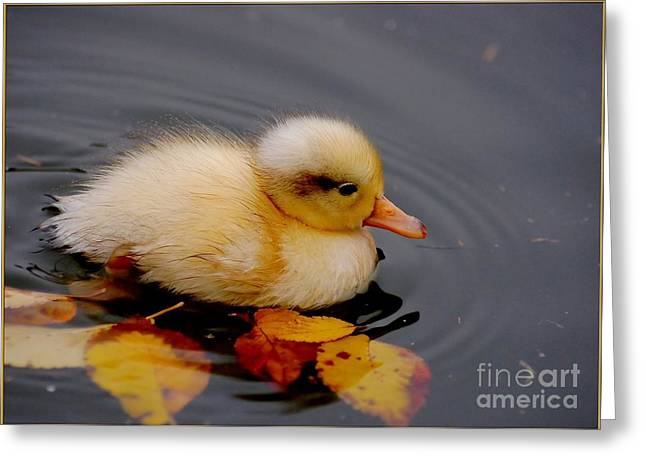 Ducklings Greeting Cards - Autumn Baby Greeting Card by Photodream Art