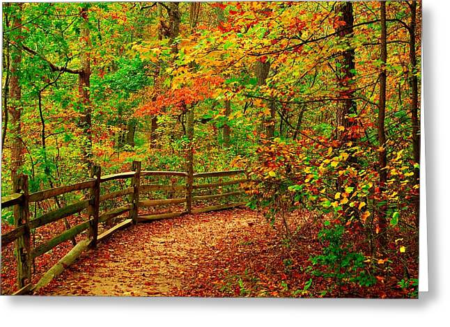 Autumn Prints Greeting Cards - Autumn Bend - Allaire State Park Greeting Card by Angie Tirado