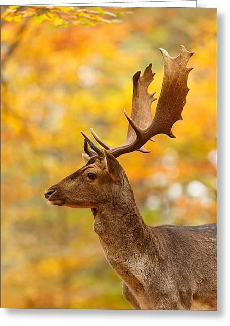 Tough Greeting Cards - Autumn Buck Greeting Card by Roeselien Raimond