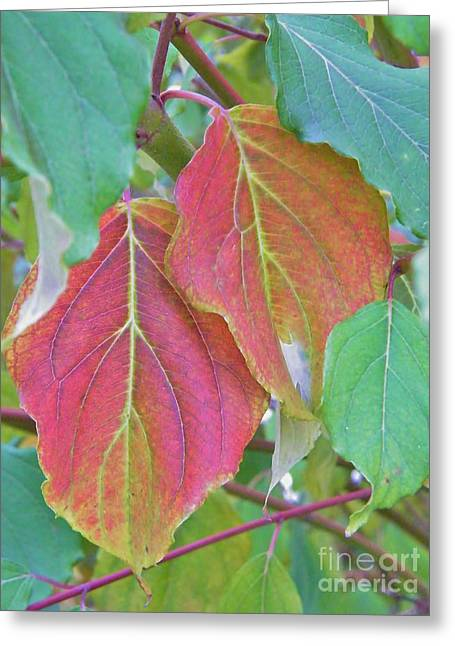 Autumn Bush Leaf Pair     Indiana    October Greeting Card by Rory Cubel
