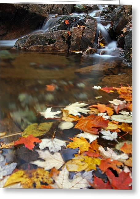 Down East Greeting Cards - Autumn Cascade Greeting Card by Juergen Roth