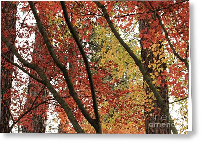 Autumn Color In Spokane Greeting Card by Carol Groenen
