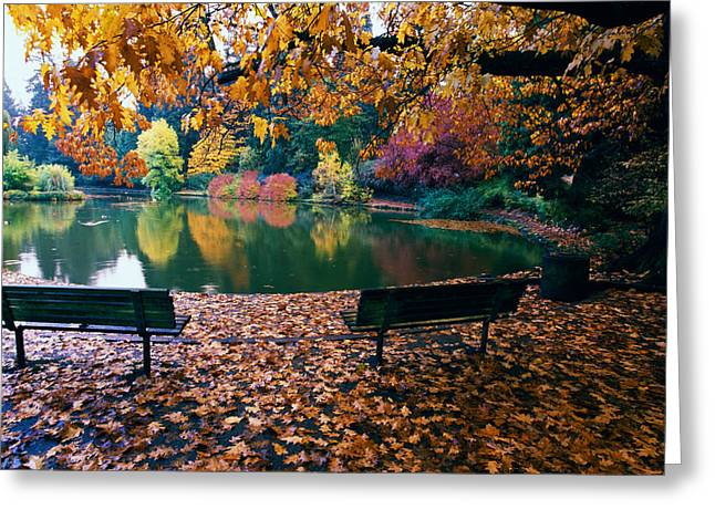 Empty Park Bench Greeting Cards - Autumn Color Trees And Fallen Leaves Greeting Card by Panoramic Images