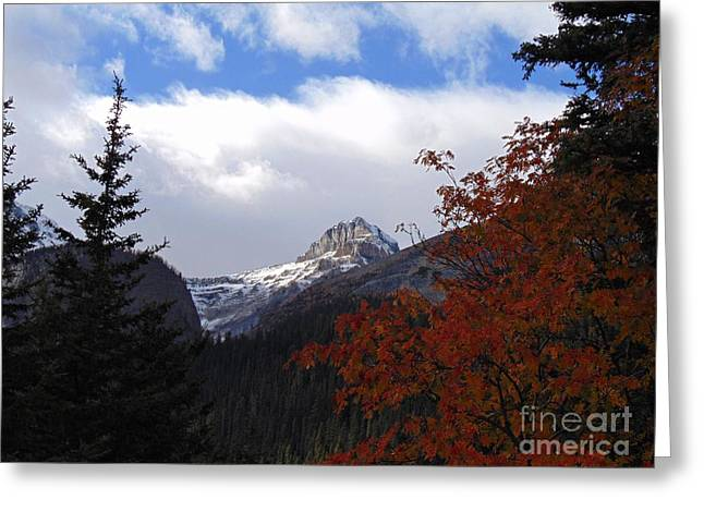 Autumn Colors Greeting Card by David A James