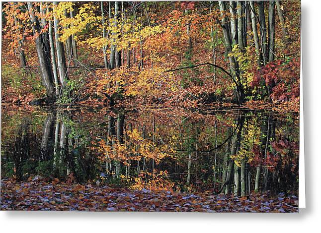 Autumn Colors Reflect Greeting Card by Karol Livote