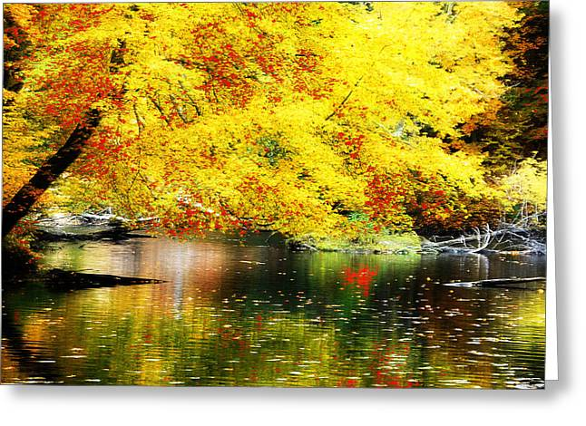 Best Sellers -  - Reflections Of Trees In River Greeting Cards - Autumn Colors Greeting Card by William Carroll