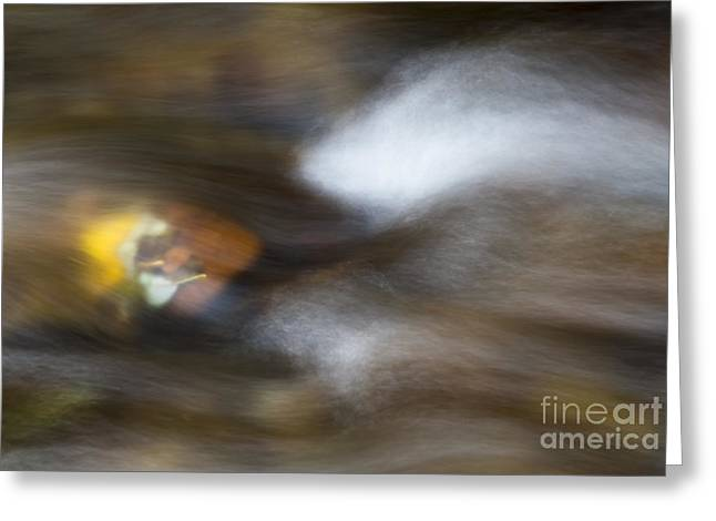 Autumn Concealed Greeting Card by Mike Dawson