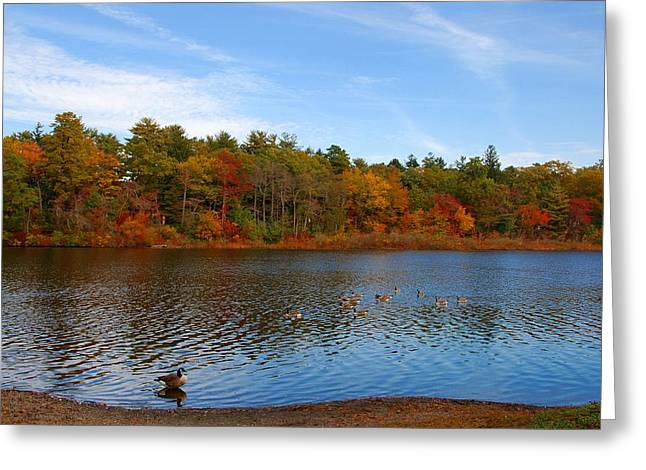Canadian Nature Scenery Greeting Cards - Autumn Day On The Lake - Lake Carasaljo Greeting Card by Angie Tirado