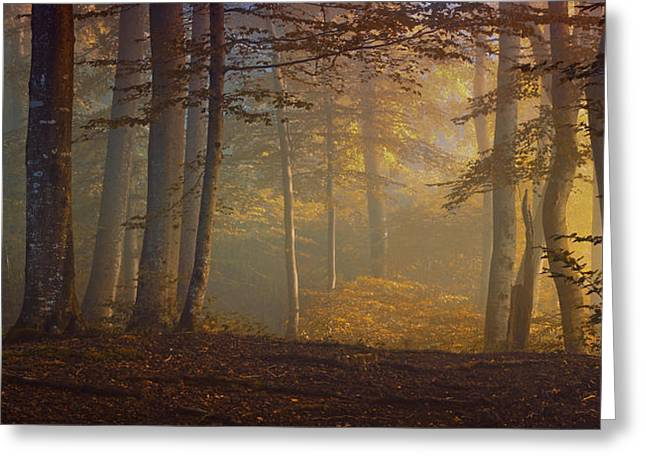 Autumn Morning Greeting Cards - Autumn Days Greeting Card by Norbert Maier