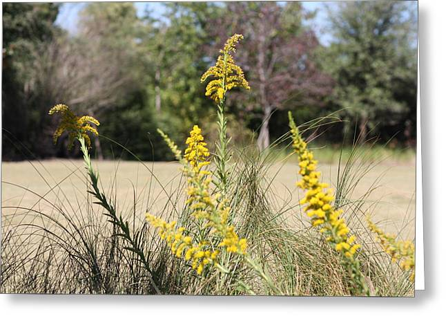Sweet Goldenrod Greeting Cards - Autumn  Greeting Card by Debra Forand