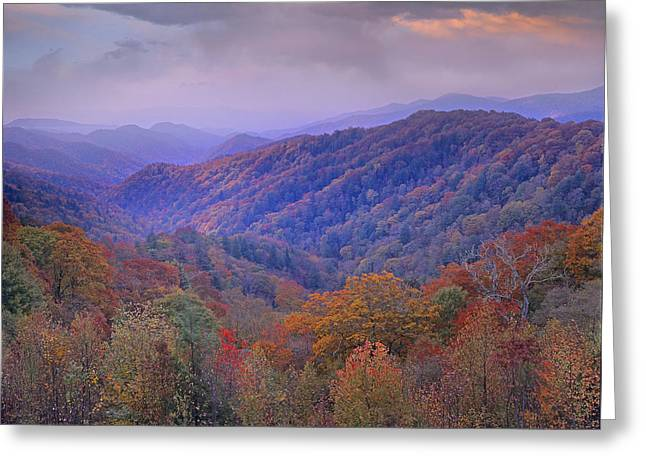 Autumn Deciduous Forest Great Smoky Greeting Card by Tim Fitzharris