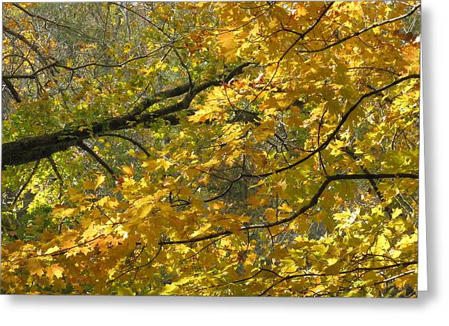 Yellow Leaves Pyrography Greeting Cards - Autumn Delight Greeting Card by Shirley Galbrecht