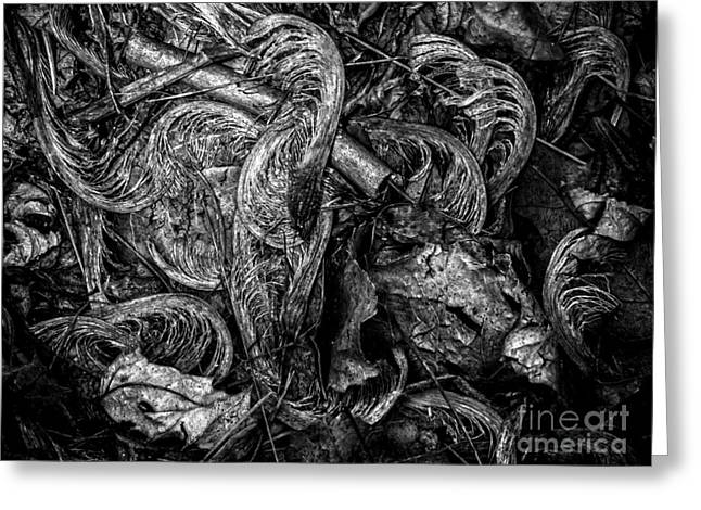Nature Abstracts Greeting Cards - Autumn Detritus Greeting Card by James Aiken