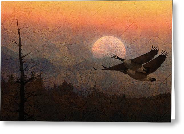 Canadian Goose Greeting Cards - Autumn Greeting Card by Ed Hall
