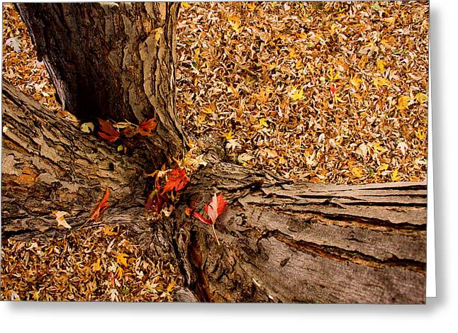 Autumn Fall Greeting Card by James BO  Insogna