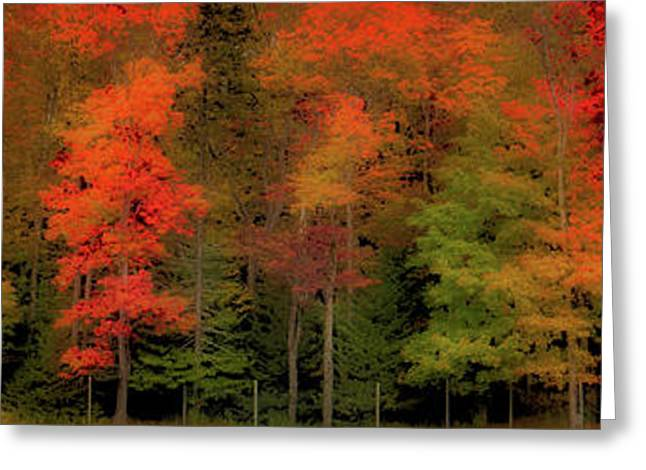 Autumn Fence Line Greeting Card by David Patterson