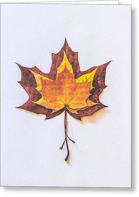Autumn Fire Greeting Card by Kate Morton