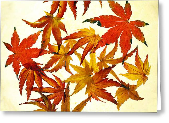 Autumn Leaf Photographs Greeting Cards - Autumn Flury Greeting Card by Rebecca Cozart