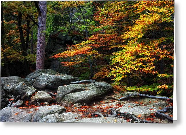 Autumn Forest Greeting Card by Artur Bogacki