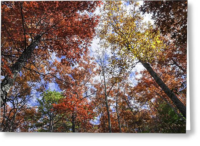 Scenic Drive Greeting Cards - Autumn Forest Canopy Greeting Card by Lynn Bauer