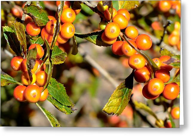 Fruit Tree Art Greeting Cards - Autumn Fruit Greeting Card by Mindy Newman