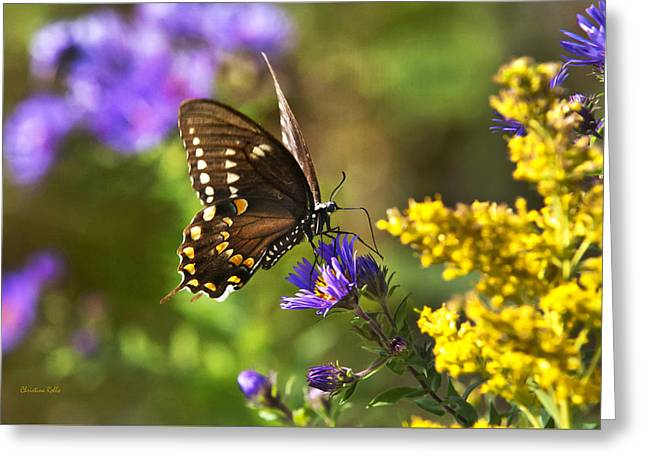 Autumn Garden Butterfly Greeting Card by Christina Rollo
